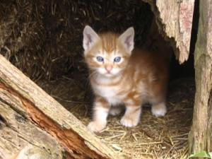 kittens-in-the-barn