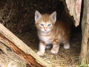 kittens-in-the-barn